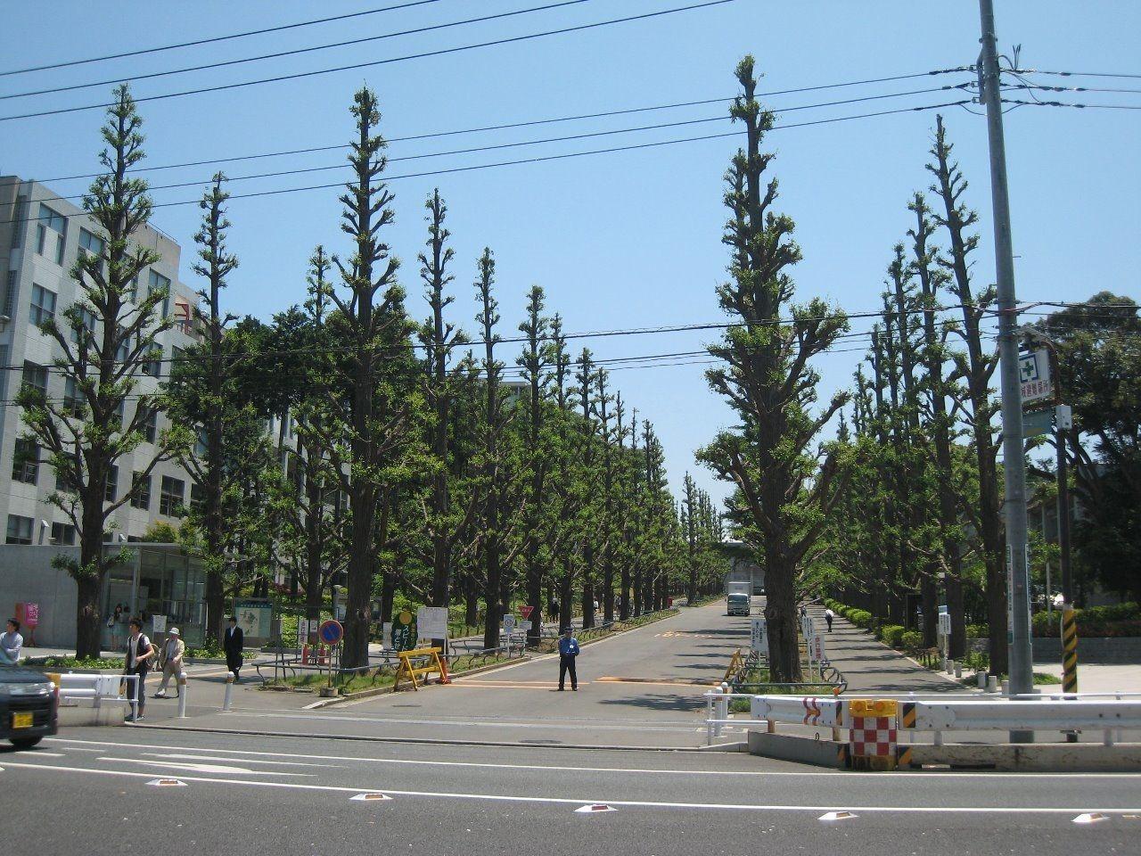 日吉駅 慶応大学 杉並木