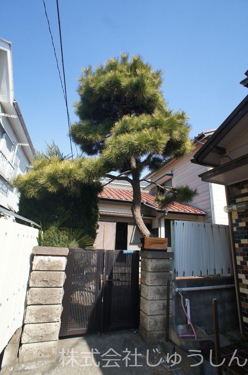 門かぶりの立派な松、昭和モダンな室内。 リノベーションを十二分に楽しんでください。 表紙